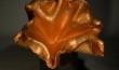 Auric Floraform ARCHIVE